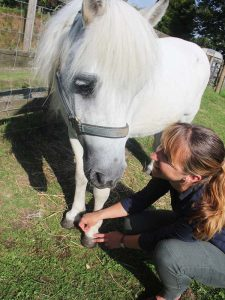 FAQs Horse Acupuncture Treatment