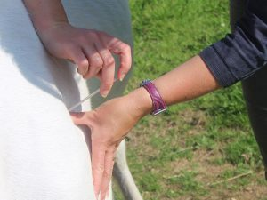 Pain relief for horses